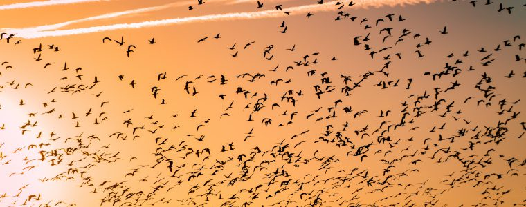 birds flying through sunset