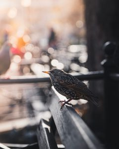 Bird in NYC
